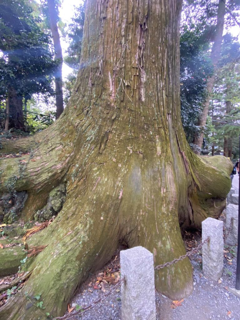 高尾山,福田健児,450歳,たこ杉,蛸杉